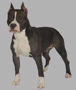 http://www.lamasko.com/pedigrees/admin/files/beverlihills14.jpg